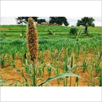 Agricultural Natural Base Oils