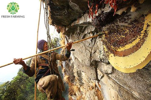 Sub Himalayan Honey