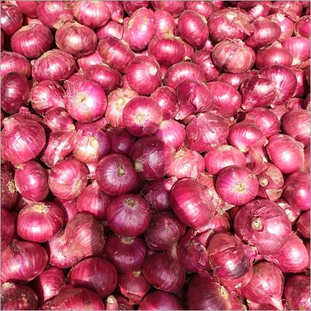 Export Onion