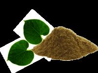 Tinospora Cordifolia Extract