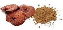 Ganoderma Extract