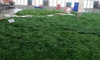 Green Chillies G4
