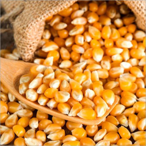 Fresh Yelllow Corn