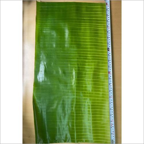 10 Inch Banana Leaf