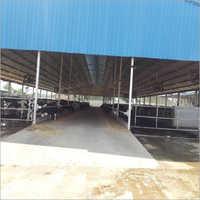 Dairy Farm Consultancy