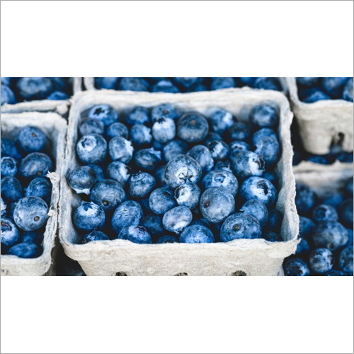 Proven Blueberries