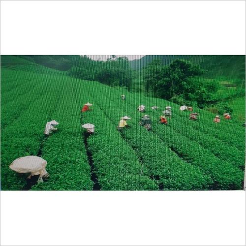 CTC Master Magic Assam Tea