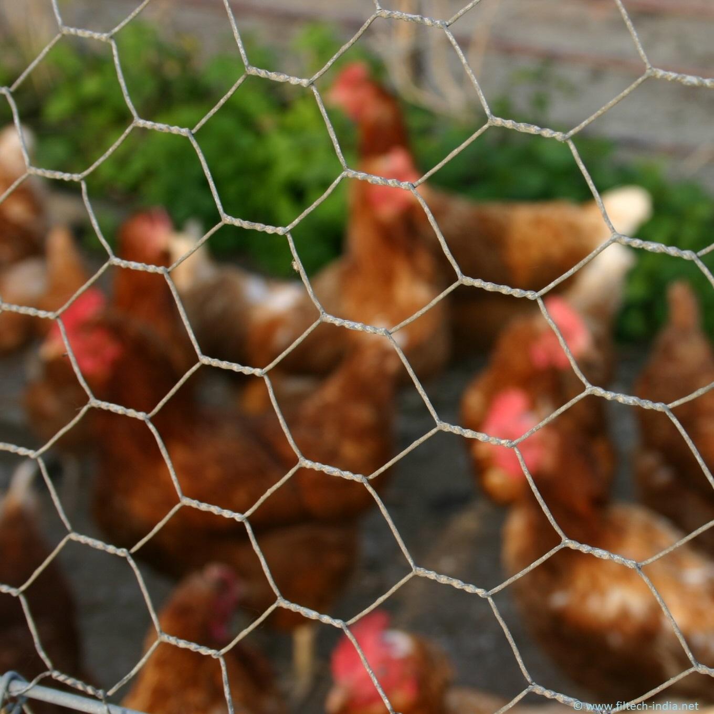 Hexagonal Chicken Mesh