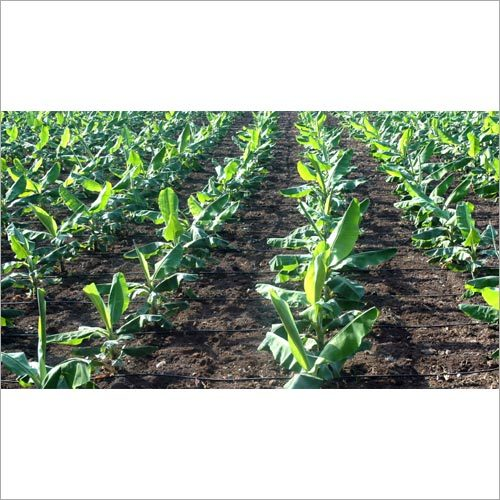 Drip Pipe  Irrigation System