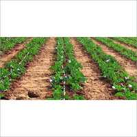 Vegetable Drip Irrigation Systems