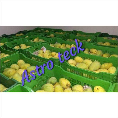 Mango Ripening Chamber