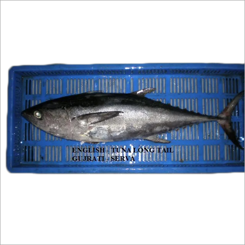 Long Tail Tuna Fish