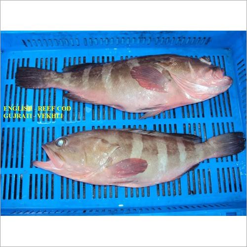 REEFCOD FISH