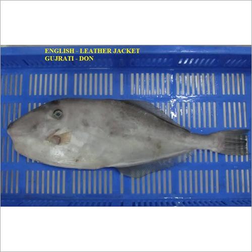 Leather Jacket Fish