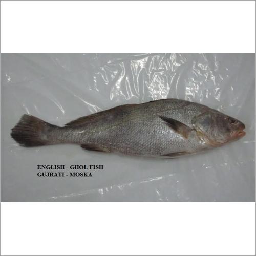 GHOL FISH