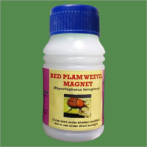 Rhynchophorus ferrugineous - RPW (Magnet)