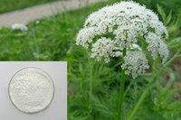 Cnidium Extract