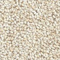 Fresh White Sesame Seeds