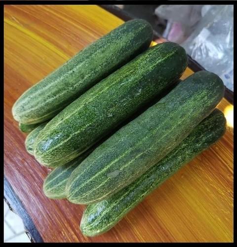Cucumber F1-AARAV