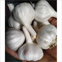 Indian Fresh Garlic