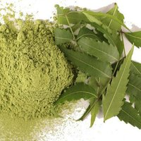 Neem (Oil Soluble)