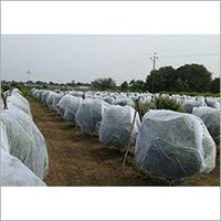 White Agriculture Crop Cover