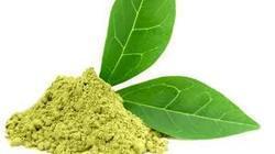 Natural Caffeine Extract ( Camellia Sinensis)