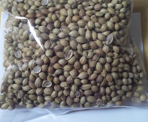 Brownish Green Coriander Seed