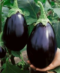 Brinjal Black Beauty