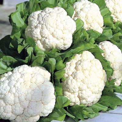 Cauliflower F1 Hybrid