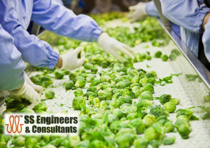 Vegetable & Fruit Cutting Washing Line