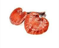 Organic Dreid Ganoderma Mushroom