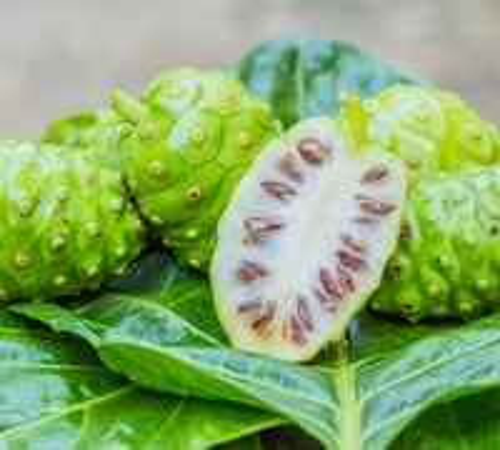 Morinda Citrifolia/ Noni