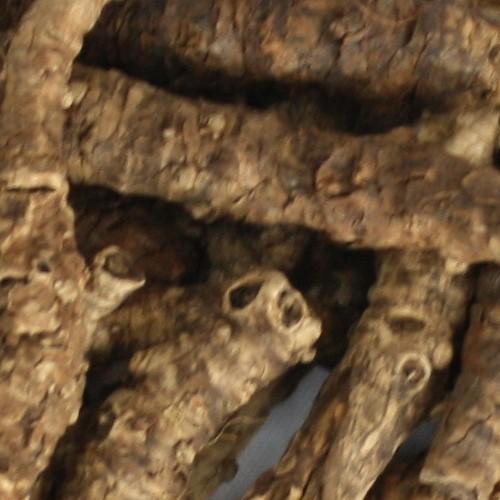 Picrorhiza Kurroa Extract/ Kutki Extract