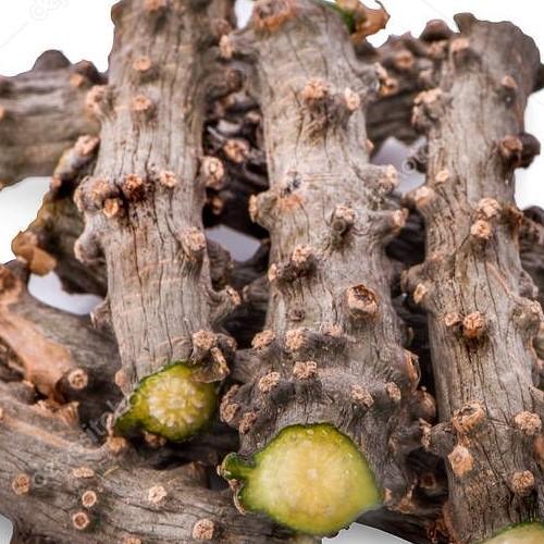 Tinospora Cordifolia Extract/ Guduchi Extract / Giloy Extract/ Amrita Extract/ Amrutha Extract