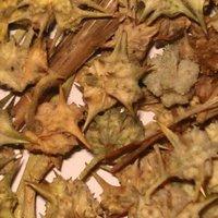 Tribulus Terrestris Extract/ Gokhru Extract