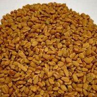 Trigonella Foenum Graecum/ Methi
