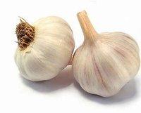 Allium sativum/ Garlic