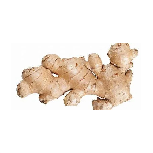 Zingiber Officinale/ Ginger