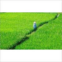 Silica Base fertilizer & oil Absorb Powder