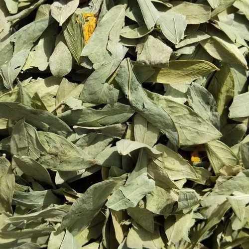 Sennna leaves