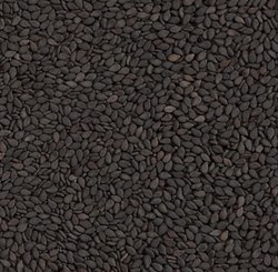 Black Sesame Seeds, Pack Size: 25 Kg