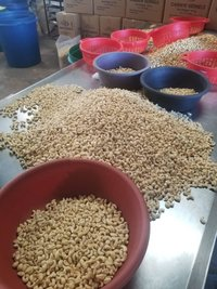Natural Cashew Nuts W20 and W320
