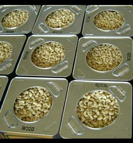 W120,W240 and W320 cashew nuts stock available