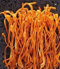 Dried Organic Cordyceps Militaris