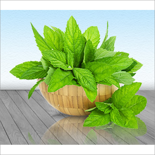 Natural Mint Terpene
