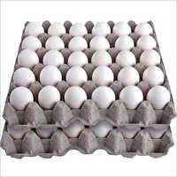 General Standard Table Egg