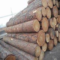 Radiata Pine Logs