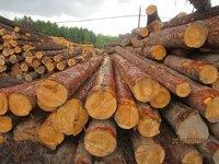 Red Pine Log