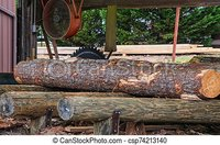 Pine Log in Sawmill